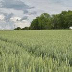 Ackerland kaufen - Waldfürst