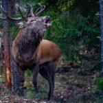Eigenjagd kaufen - Waldfürst