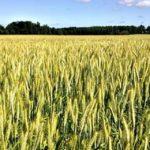 Landwirtschaftliche Fläche kaufen - Waldfürst