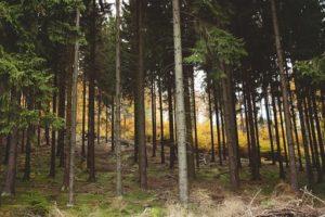 Wald kaufen - Waldfürst