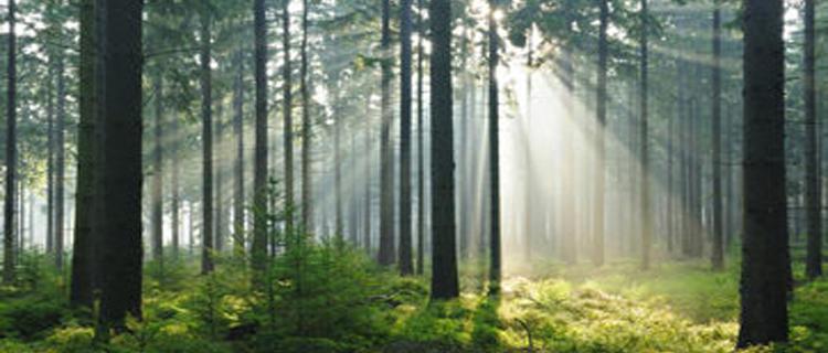 Wald kaufen – Warum?