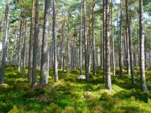 Waldgrundstück - Waldfürst