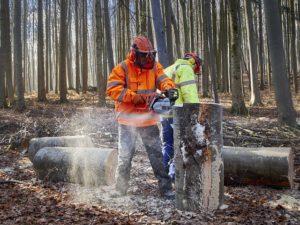 Waldgrundstück kaufen für Brennholz - Waldfürst