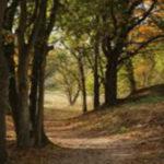 Waldgrundstück kaufen - Waldfürst